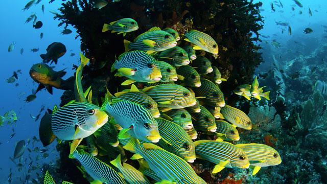 Colorful fish at Raja Ampat, Indonesia